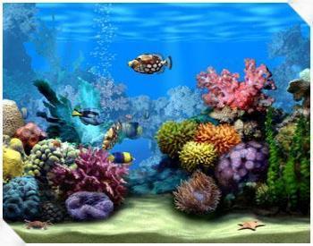 marine-aquarium.jpg